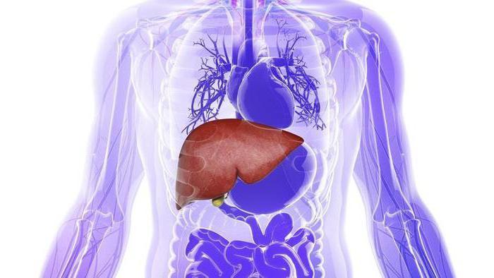 parenchymal organ