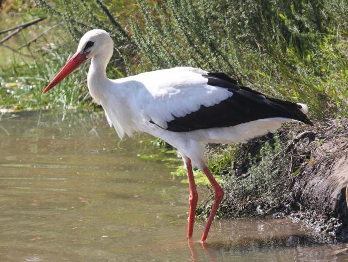 dream storks in the sky