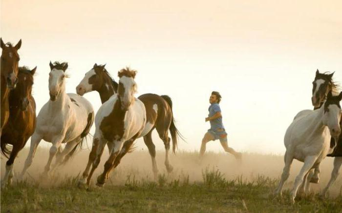 movies about horses 2016 list