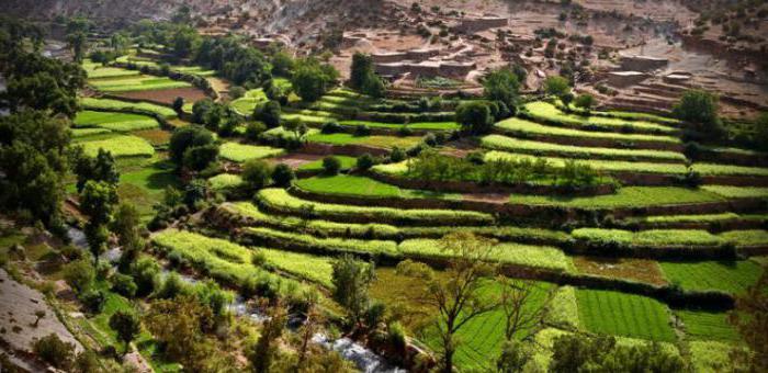 Землеустройство и кадастры