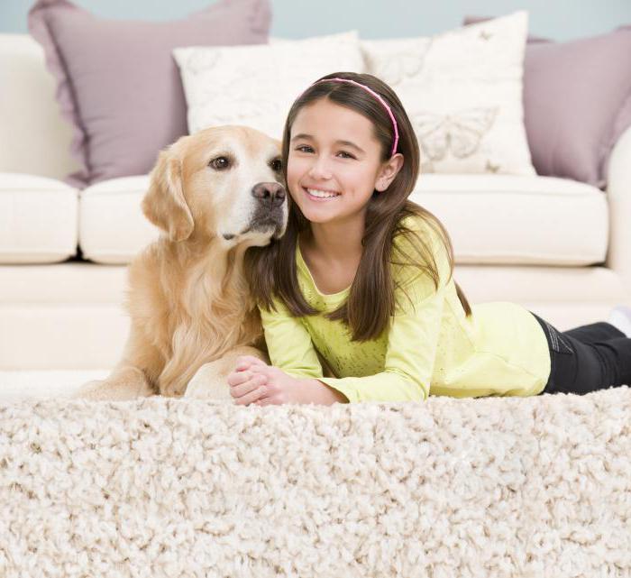 Средства для чистки ковров в домашних условиях. Сухая чистка ковров