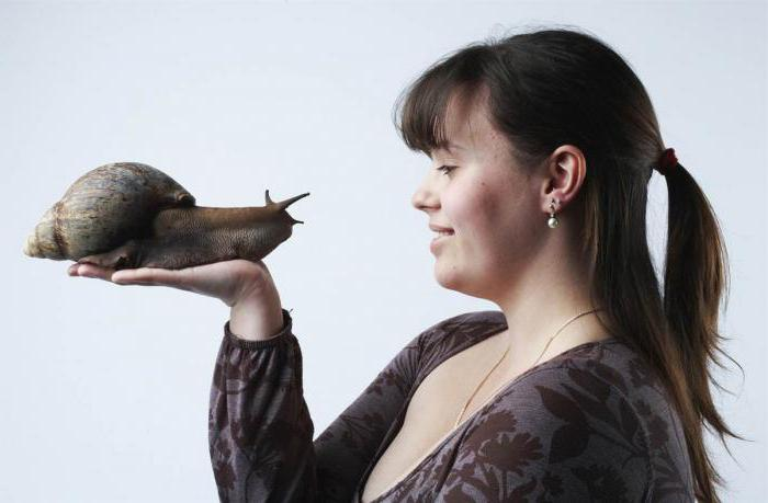 Achatina snails in cosmetology reviews
