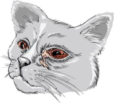 conjunctivitis in cats home treatment