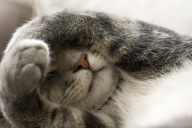 conjunctivitis in a cat