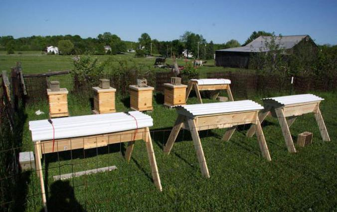 Beekeeping for beginners: where to start