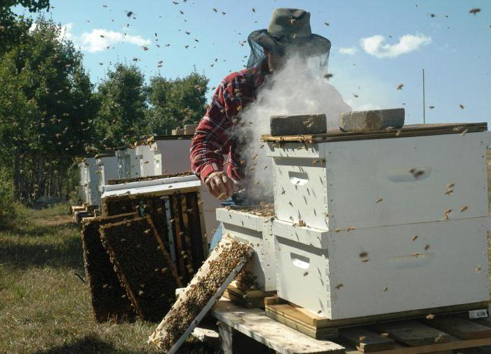 beekeeping where to begin a beginner
