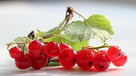 К�а�ная ягода вид� названия и опи�ание Кл�бника малина
