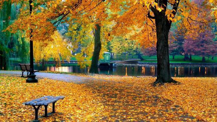 children's puzzles for children about autumn