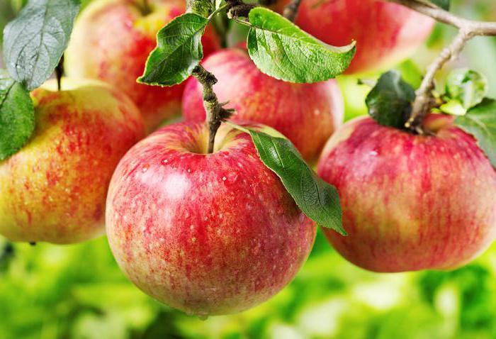 яблоко БЖУ