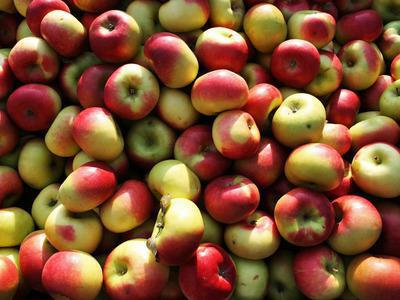 яблоко БЖУ калорийность