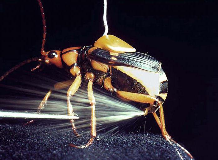 what do bombardier beetles shoot at their opponents