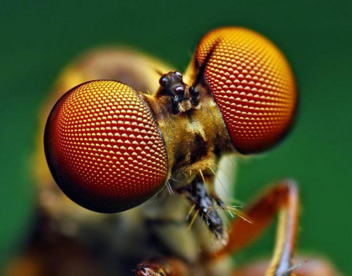К чему снятся насекомые по соннику: если вам приснились насекомые - то вас ждет порча и болезнь.