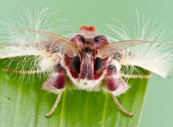 отряды насекомых таблица