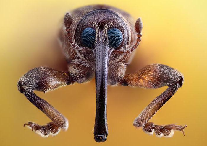 таблица по биологии 7 класс отряды насекомых