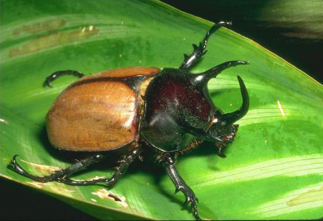сравнительная характеристика отрядов насекомых таблица