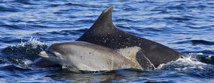 black sea dolphin red book