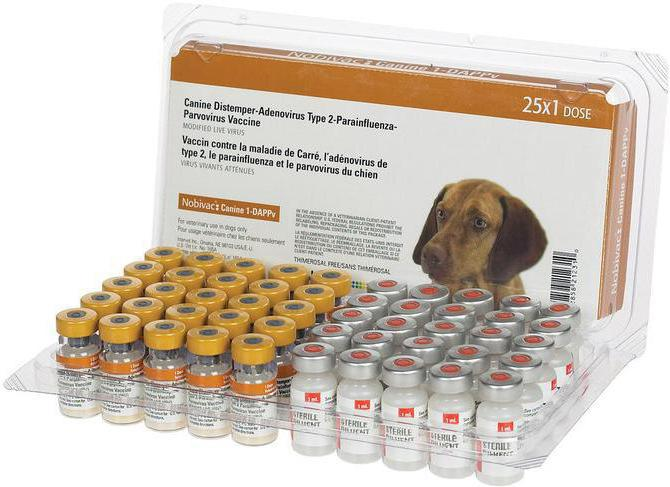 Энтерит у собак Симптомы и лечение энтерита