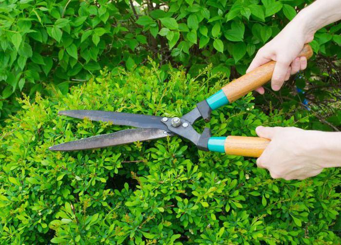 ножницы сонник к чему снятся