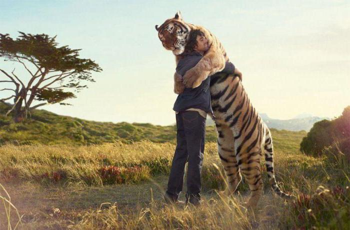 тигр во сне к чему снятся