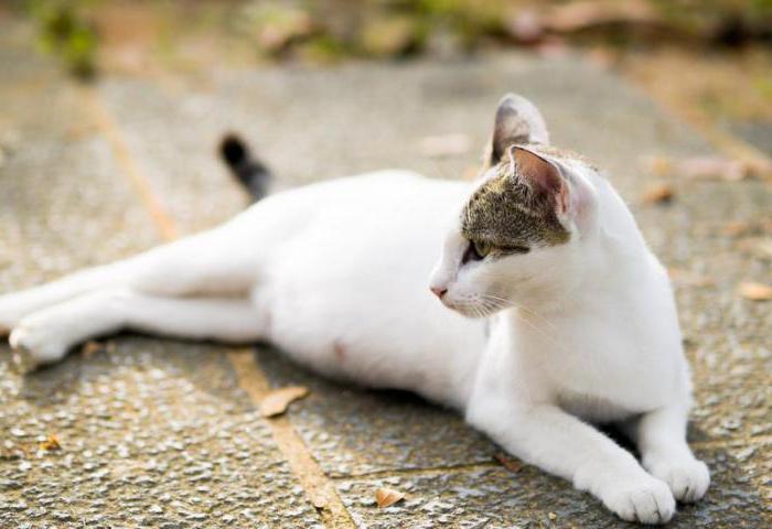 Сонник: к чему снится беременная кошка? Значение и толкование сновидения