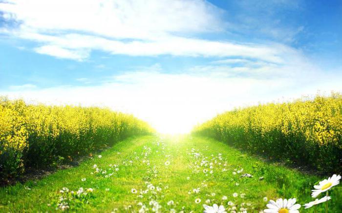 dream field flower field