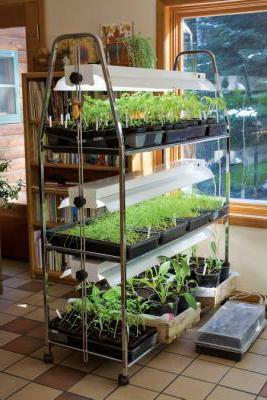 fluorescent seedlings