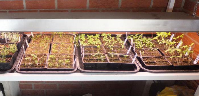 led lamps for seedlings