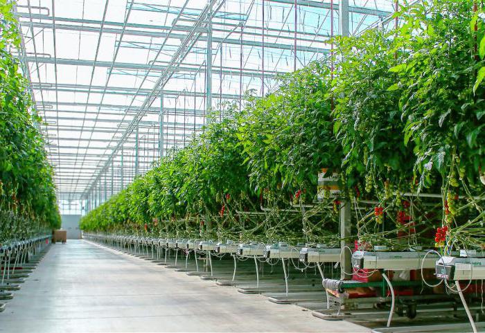 Выращивание овощей в закрытом грунте оквэд 50
