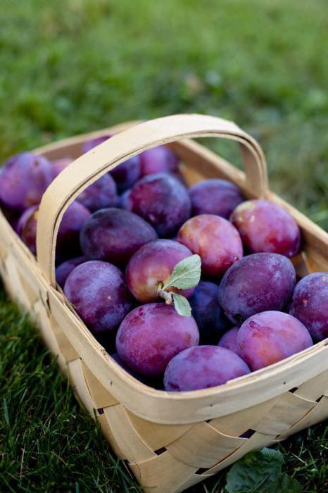 Слива фрукты для беременных 97