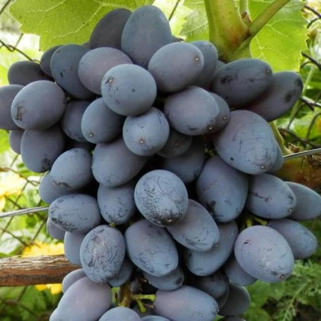 виноград снижает холестерин