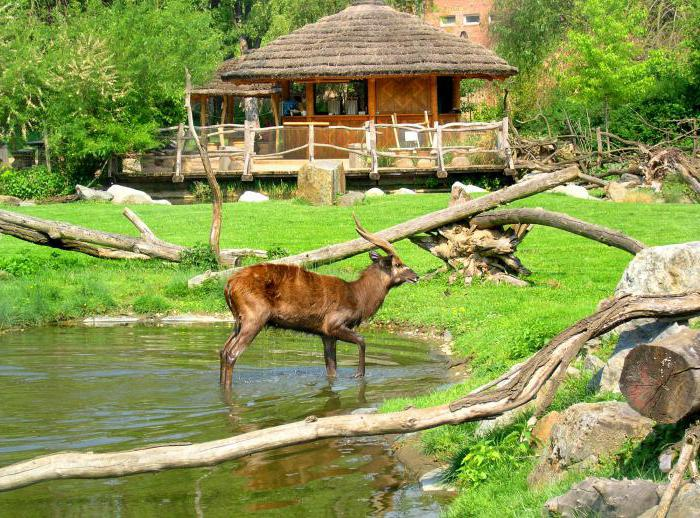 how does the zoo in prague