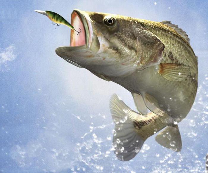 отчеты о рыбалке в светлые горы пруд москва