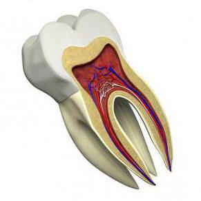 канал зуба