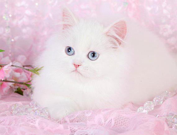 кот с большими глазами фото