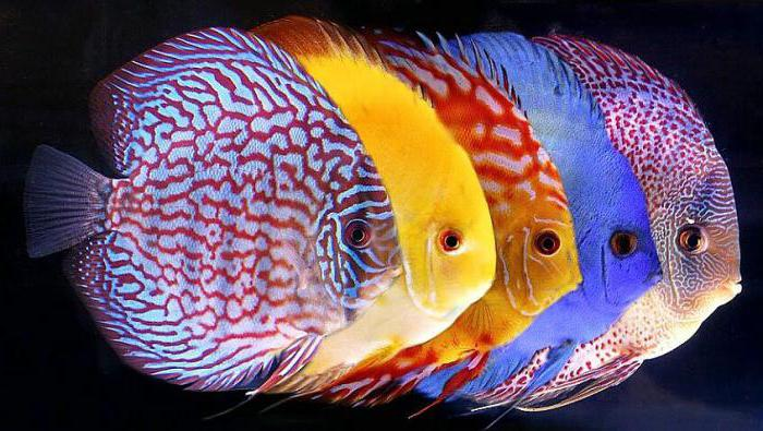 the most beautiful fish