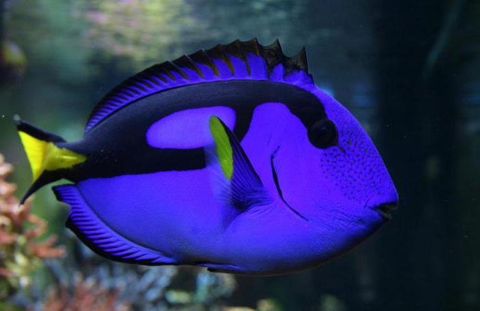 very beautiful fish