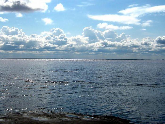 кулундинские озера