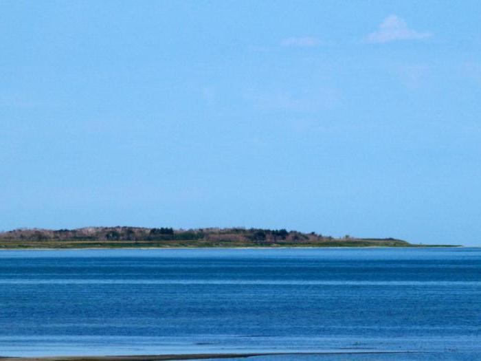 кулундинское озеро алтайский