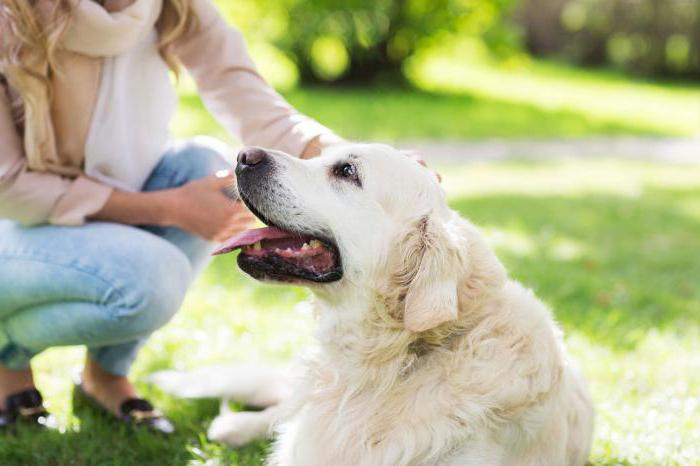 сонник собака белая добрая