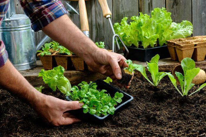 Какие овощи сажать в огороде 664