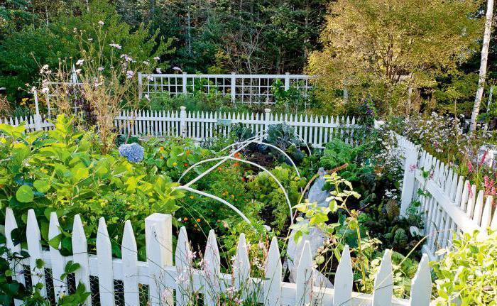 why dream of a garden