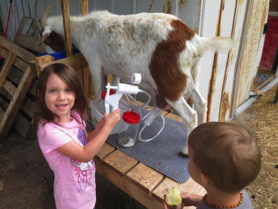 Ручные доильные аппараты для коз: как сделать и как использовать?