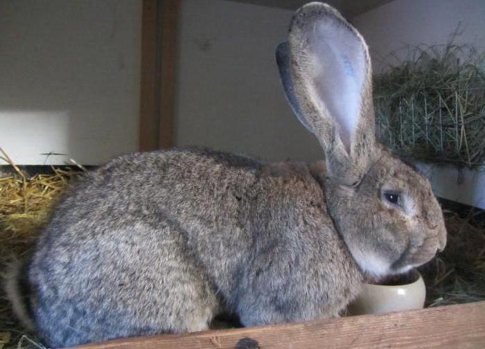 начитались кролик ризен картинки хотелось нам быть