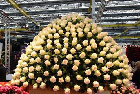 kenyan rose varieties