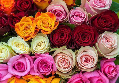 Kenyan Rose Description