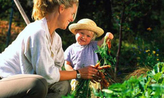 The development of curiosity in preschoolers