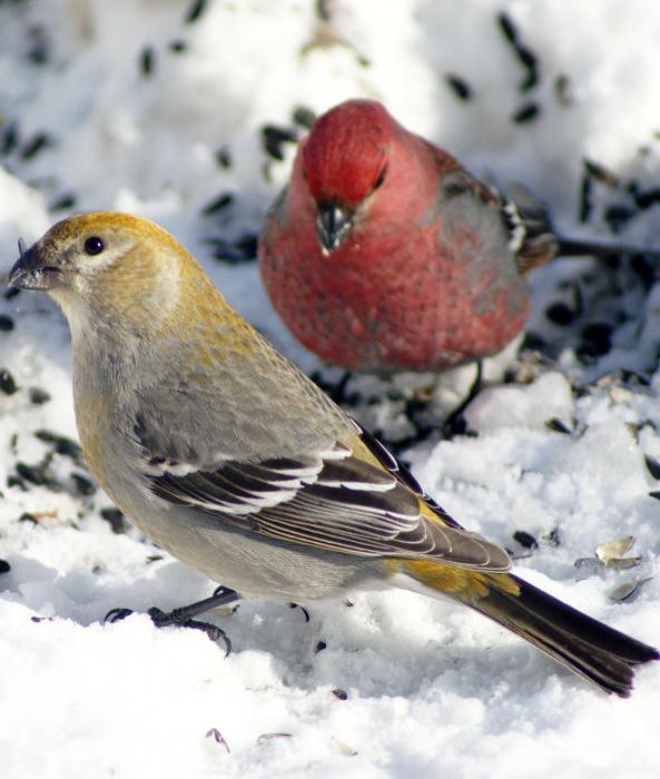 schur bird photo