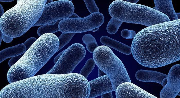 Царство микроорганизмов виды 34