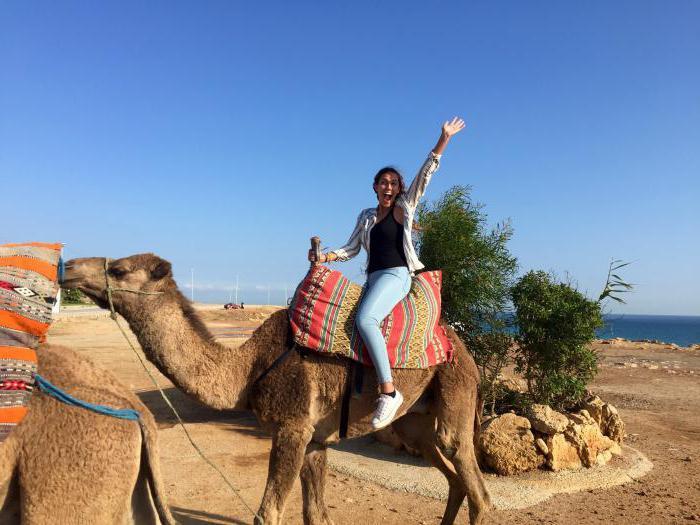 Сонник верблюд синего цвета