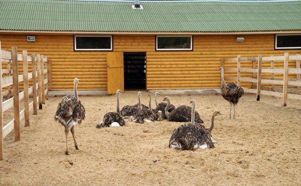 Разведение животных как бизнес в домашних условиях 839